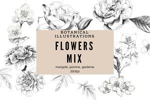 Sketched Flower Illustrations