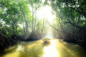Boat sails through tunnel in jungles