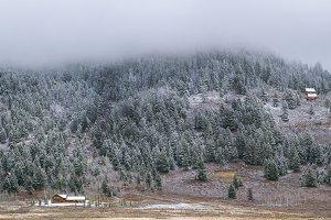 Winter forest landscape. Wallpaper