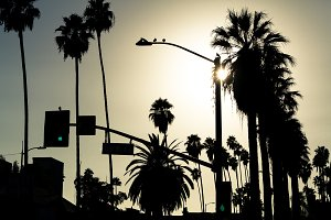 Palms. Summer background