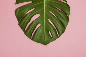 Tropical leaf on pastel pink