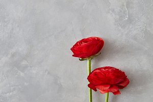 three red rose flowers on a gray background