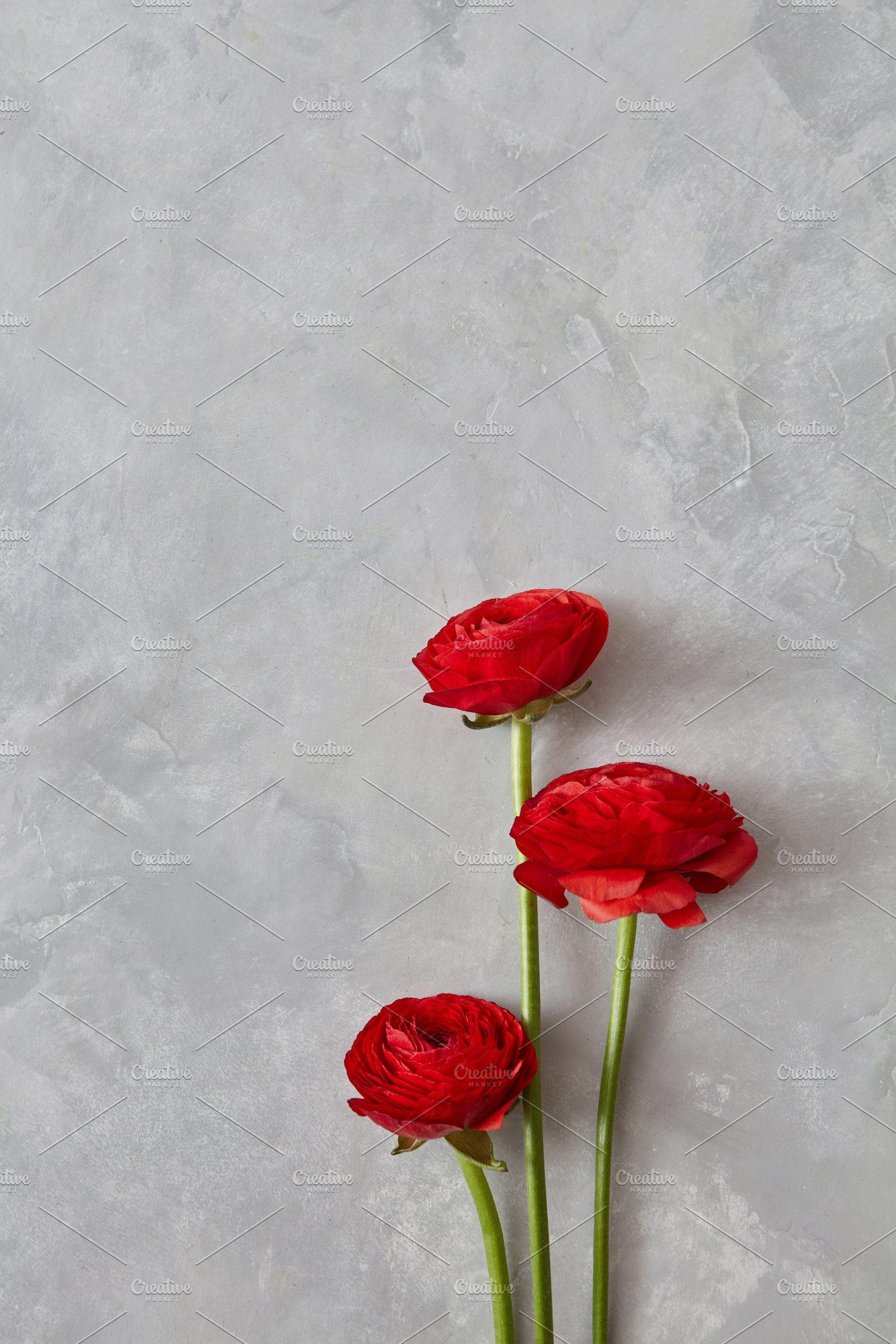 Three Red Rose Flowers On A Gray Background Nature Photos