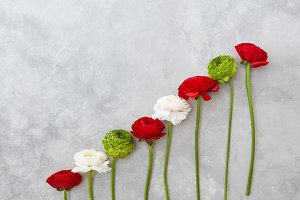 beautiful different flowers on a gray background