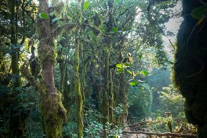 Surreal magic of wild mossy forest