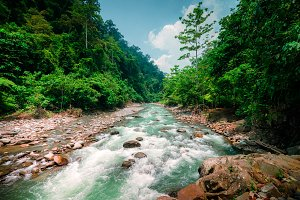 Wild Nature of North Sumatra