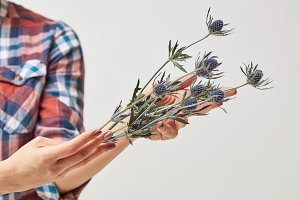 Hands of a girl holding blue flowers eryngium
