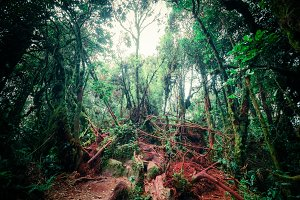 Mystical tropical mossy forest