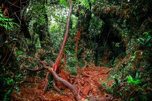 Mysterious nature of jungles