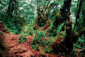 Gloomy tropical forest