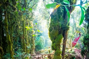 Tropical mossy forest