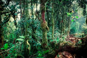 Lush vegetation of tropical forest