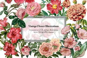 Vintage Flower Illustrations - Vol 1