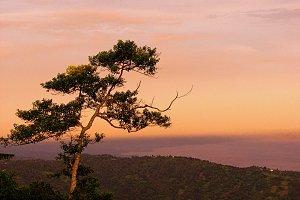 Lone Tree at Dusk