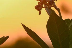 Flowers in sunset light.
