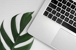 Laptop & Monstera Leaf