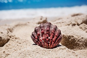 Sea Shell With Sand On Sunny Day