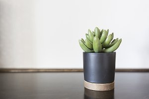 Succulent on Wood Shelve