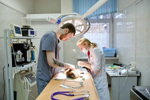 Veterinarian operating room.