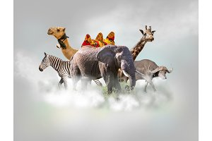 Wild animals group - giraffe, elephant, zebra above white clouds in gray sky