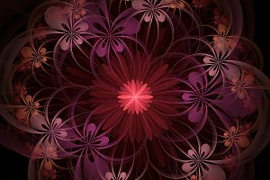 Fractal NI08 : Floral