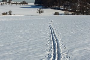 Cross-country skiing tracks in snow
