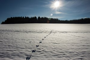 animal tracks in the snow