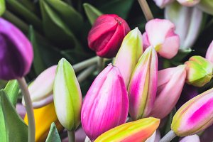 Buds of various tulips