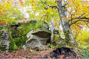 Yellow-green foliage in the trees. Trees and rock.Woodland scenery.