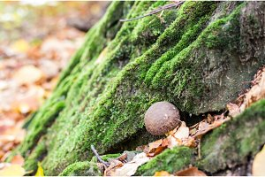 Mushroom growing between the stones. Autumn mood.
