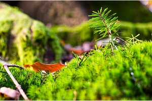 Brightly green forest moss. Needles. Forest background.