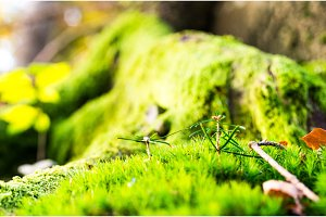Forest background. Forest texture. Green forest moss.