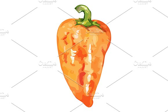 Watercolor Sweet Bell Peper Vector