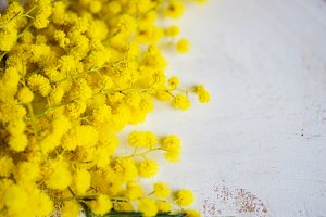 Spring flower frame with mimosa