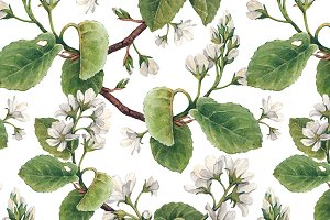Watercolor illustrations and pattern