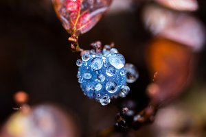 Macro photo of blueberries. Blueberr