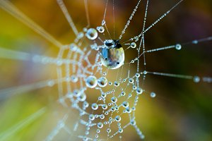 The dew on the web. Web in the backg