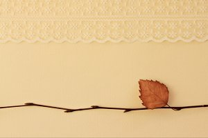 Birch twig with lace