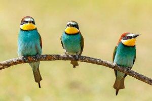 Three colorful birds