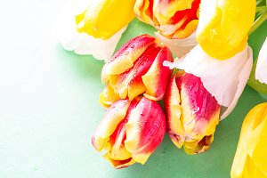 Tulip flower background.
