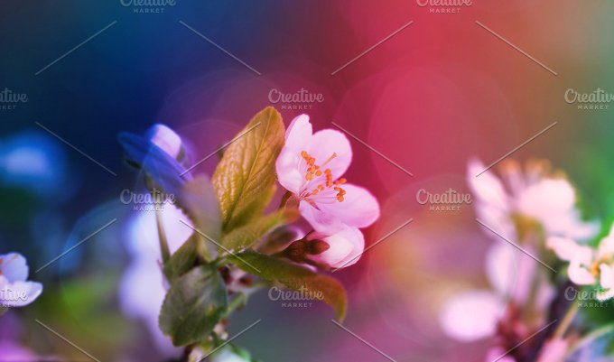 Nature background. Cherry twig - Nature