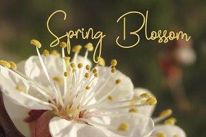 Spring Blossom Photo Bundle