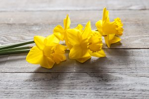 Yellow narcissus flowers on wood