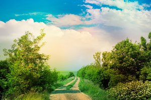 Summer landscape with road.