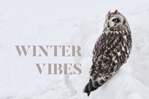 Winter Vibes Photo Bundle