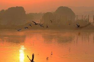 Sunset Lake and Birds