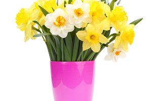 narcissus bouquet in pot