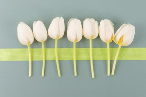 Tender white tulips in row