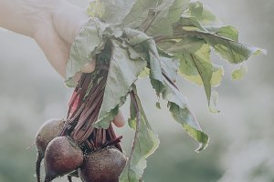 Farmer Adult Man Holding Beetroots