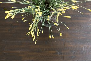 Close up of Yellow Decor on Wood
